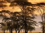 Africa by TalePhotography