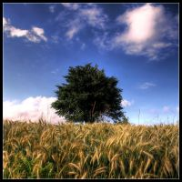 Up the field by FlorentCourty