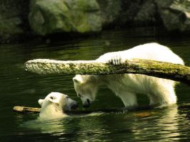 Polarbears playing by Elvira1990