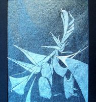 Plant by AnneCooper