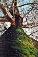 cellulite of the tree by childchewer