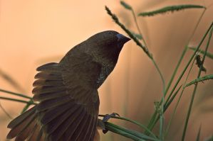 Fan of Feathers by Sprout-Photography