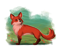 The fox by MikkeSWE