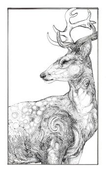 Stag by Palila