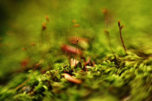 Dance of the moss buds by a-strange-loop