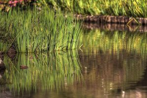 Grassy HDR Reflections by pantsonnos