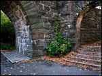 Ivy and Arches by steeber