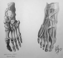Human Anatomy - Foot by HaloGoddess1