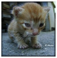 Baby Cat VIII by Tech-Attack