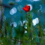 Glory days... by ildiko-neer