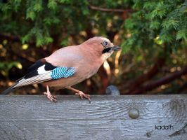 jay III by k-a-d-a-t-h