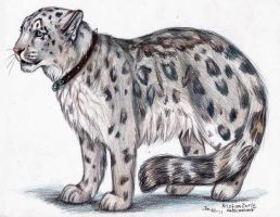 Snow Leopard: Commission by NatsumeWolf