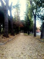 The  road's leafs by SoundLess090voice