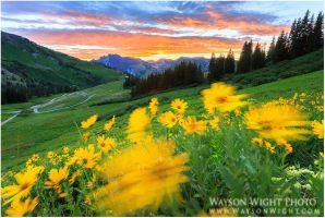 Albion Basin by tourofnature