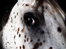 Horse Eye by XToxicityX