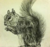 Squirrel by aeroscythel