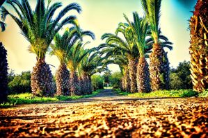 The Natural Road by RiegersArtistry
