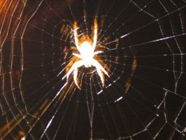 Spider Web Silhouette by Riverd-Stock