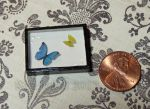 Mini Morpho and Tailed Sulphur Butterfly Display by Kyle-Lefort