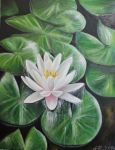 Waterlily painting by ahsr