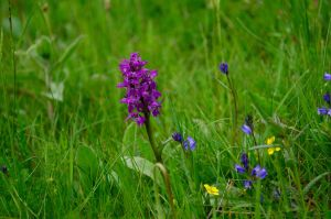Wild orchid by Criosdan