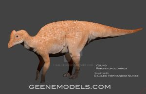 Young Parasaurolophus by GalileoN
