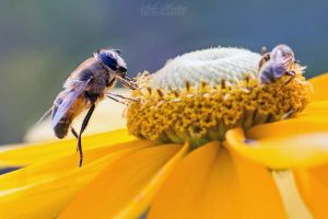 Hey dude, get the hell out of MY flower! by Seb-Photos