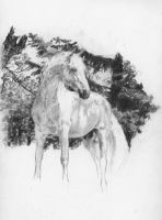 White Stallion - WIP by akuinnen24