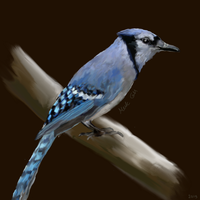 BlueJay by Gottheart