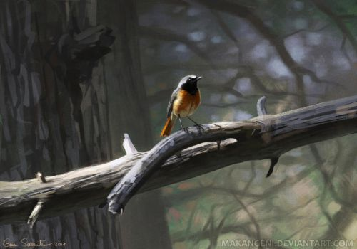 Common Redstart by makangeni