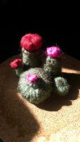 Super cute cactus family by hitomi-the-brave428
