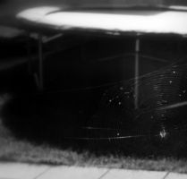 Spider Web B+W by Chihito