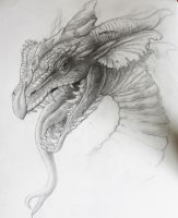 Dragon Sketch by EmeraldJune