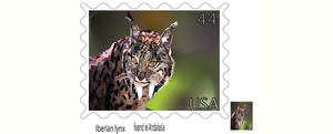Lynx Stamp by angelsoflight