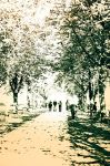 walking through the park by wulfman65