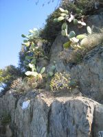 cacti  in cinque terre by ingeline-art