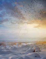 PREMIUM background - WinterBirds by Euselia