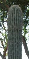 574 - cactus by WolfC-Stock