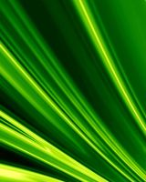 Green palm leaf by arghus