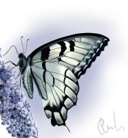 butterfly by TheBigProblem