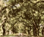 Bicycles through Wormsloe by JNS0316