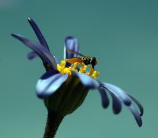 Bee There by andras120