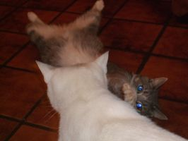 Xx cat fight xX by charly1998
