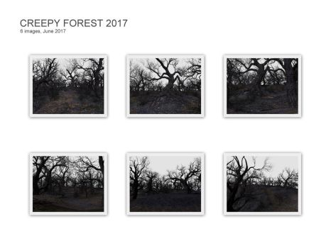 Creepy Forest 2017 by cerragirl