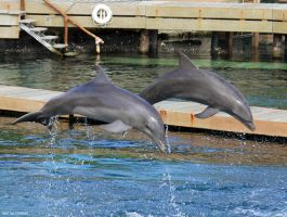 Double Dolphin by Laernu