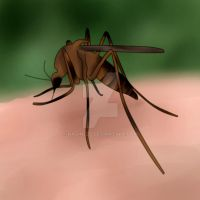 Mosquito by nadine20