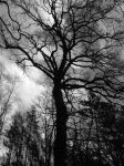 black tree by lauratje-pony