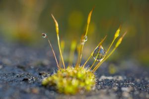 sunny moss by MarcosRodriguez