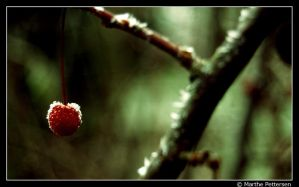 Red berry by Marthep