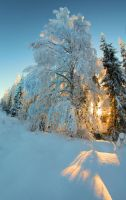 welcome winter by KariLiimatainen